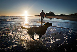 © Licensed to London News Pictures. 07/10/2012. Bamburgh, UK.  A woman walking her dog at sunrise on Bamburgh beach in front of Bamburgh Castle (right) in Northumberland, UK on October 7, 2012. Photo credit : Ben Cawthra/LNP