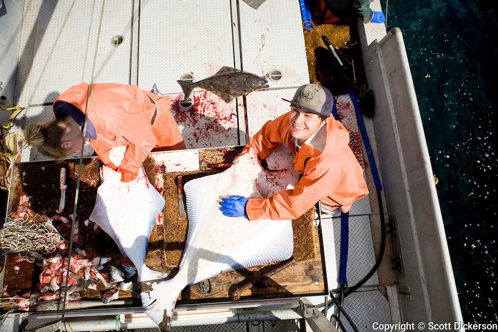 Keith Bell and Emma Teal Laukitis dressing halibut while commercial longline fishing in the Aleutian Islands, Alaska.
