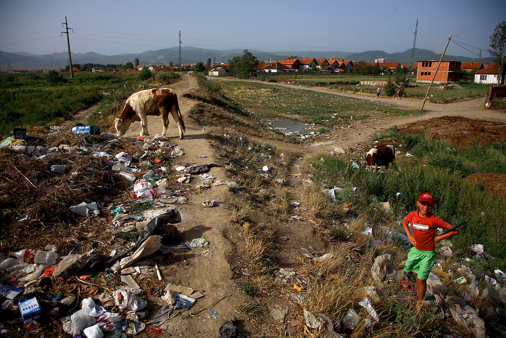 Children playing in a polluted river near a community garbage dump on the outskirts of Vushtrri. A young boy herding cows...Vushtrri, Kosovo, Serbia.