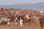 Pushkar 2011 Scenes