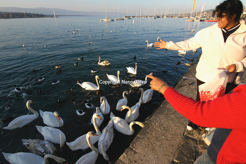 People feeding the birds in Quai Gustave Ador, in the port, Geneva, Switzerland