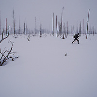 Cross country skier near Old Faithful, Yellowstone National Park.