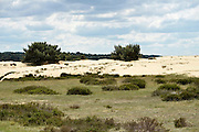 Nederland, Schaarsbergen, 25-5-2014Na de brand van enkele weken geleden is de natuur op de Veluwe zich langzaam aan het herstellen. Zandverstuivingen met vliegendennen.Foto: Flip Franssen/Hollandse Hoogte