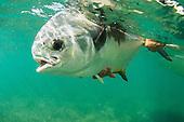Saltwater Fishing Stock Photos