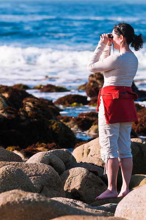 Woman whale watching from rocky beach, Pacific Grove, California USA