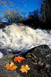 Maple leaves and Wadleigh Falls on the Lamprey River.  Lee, NH