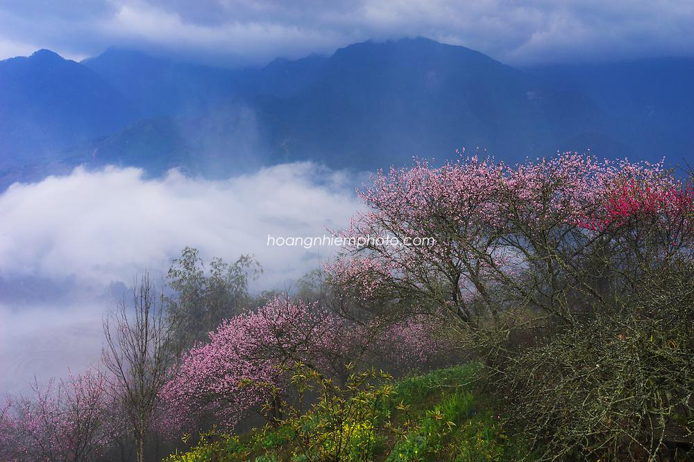 Vietnam images-landscape-phong canh-Sapa Hoàng thế Nhiệm