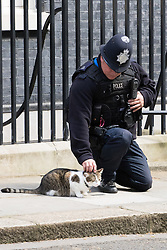 Downing Street, London, May 3rd 2016. A police officer strokes Larry the Downing Street cat as warm sunshine floods the pavement. ©Paul Davey<br /> FOR LICENCING CONTACT: Paul Davey +44 (0) 7966 016 296 paul@pauldaveycreative.co.uk