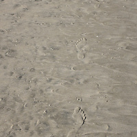Footprints in the sand; Encinitas, CA.