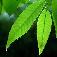 Green leaves against dark background