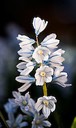 20160413 Spring Blooms