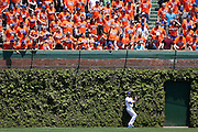 CHICAGO, IL - MAY 18: David DeJesus #9 of the Chicago Cubs makes a catch near the center field ivy in front of New York Mets fans invading the bleachers during the game on May 18, 2013 at Wrigley Field in Chicago, Illinois. The Cubs won 8-2. (Photo by Joe Robbins)