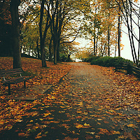 Path heavy with fallen Autumn leaves on a rainy day.