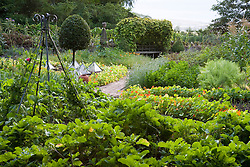 The vegetable garden at Ballymaloe Cookery school. Clipped standard bay trees - Laurus nobilis