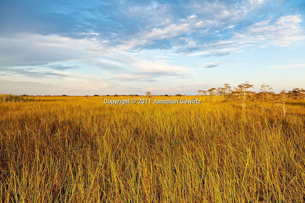 "Golden sunlight in the early morning on the ""River of Grass"" sawgrass prairie in Everglades National Park, Florida. WATERMARKS WILL NOT APPEAR ON PRINTS OR LICENSED IMAGES."