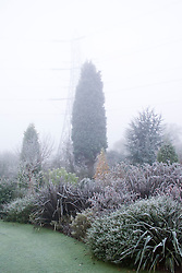 Tall conifer planted to disguise pylon.