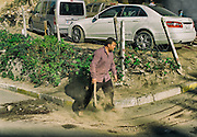 15/10/2013 - Istanbul - Tarlabasi area - A man is covering with sand, the blood from the the killed beef.