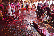 Devotees,  lost in trance take blessing from Godess Radha, beloved of Lord Krishna after the event of Samaaj gets over in Barsana village after celebrating Holi, the festival of colors.<br /> <br />  The colored mud on the floor is considered holy and people take a portion of it with themselves.