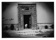 One of Turquoise Mountain Foundation's two dogs pauses in handcrafted gateway to the fortress which is the headquarters for the foundation, Kabul, Afghanistan.