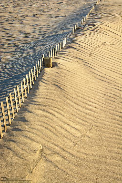 Sand dune erosion control Assateague Island National Seashore.