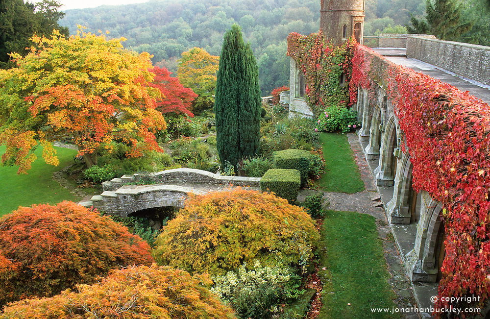 General view of the autumn colours of Acer palmatum and Viginia creeper from the upper terrace