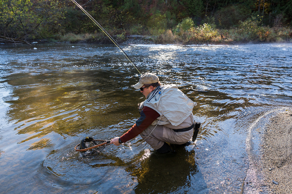 a male angler landing a fly caught landlocked atlantic salmon on the Clyde River in the Northeast Kingdom, Vermont