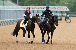 Derby 142 hopeful Shagaf with Gian Cueva up were on the track for training, Tuesday, May 03, 2016 at Churchill Downs in Louisville.