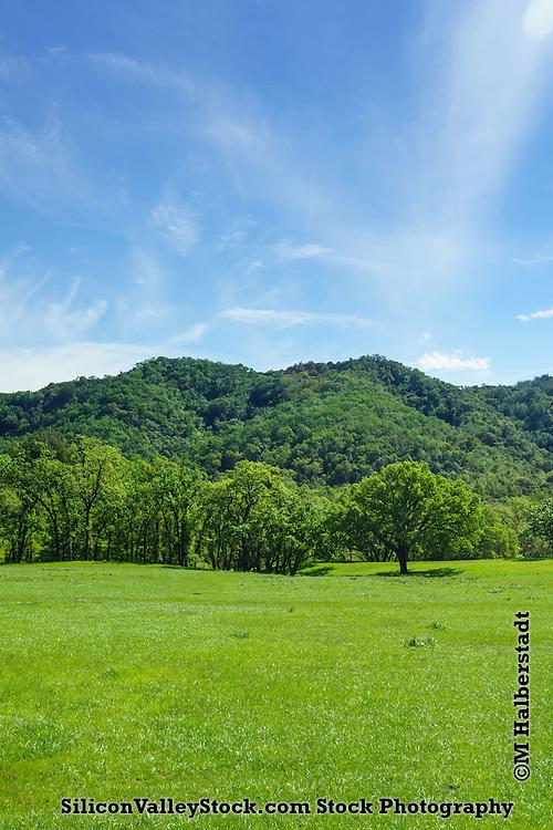 Unusually Green Landscape of California near Gilroy, California