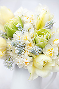 Arrangement with early tulips 'Verona' and 'Exotic Emperor' and narcissi 'Erlicheer', 'Bridal Crown' and 'Sailboat', muscari 'Lady Blue' and white hyacinths