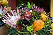 Sunrise Country Market, Protea Flower, Upcountry Maui, Hawaii