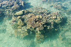 Corals in Wailgwin Lagoon are exposed at low tide