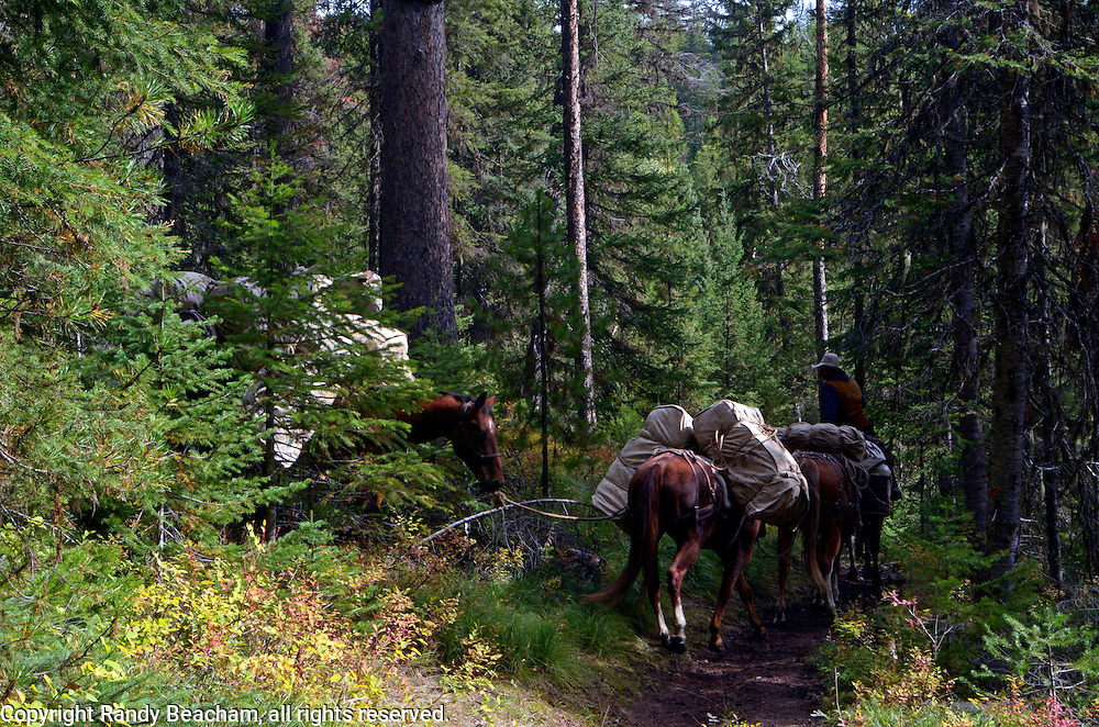 Horse packing into the Bob Marshall Wilderness Complex along the Spotted Bear River Trail in early fall. From my 2013 Artist-in-Wilderness Connection program residency run by the Flathead National Forest, Hockaday Museum of Art, Bob Marshall Wilderness Foundation and the Swan Ecosystem Center. Flathead Naitonal Forest, northwest Montana.