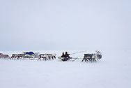 A Nenets family migrates several hours to new pastures for their reindeer so they can feed on fresh lichens.