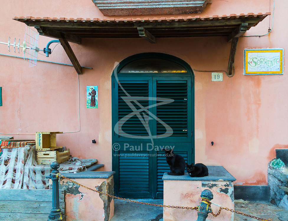 Sorrento, Italy, September 15 2017. A pair of cats sit outside a house in Sorrento, Italy. © Paul Davey