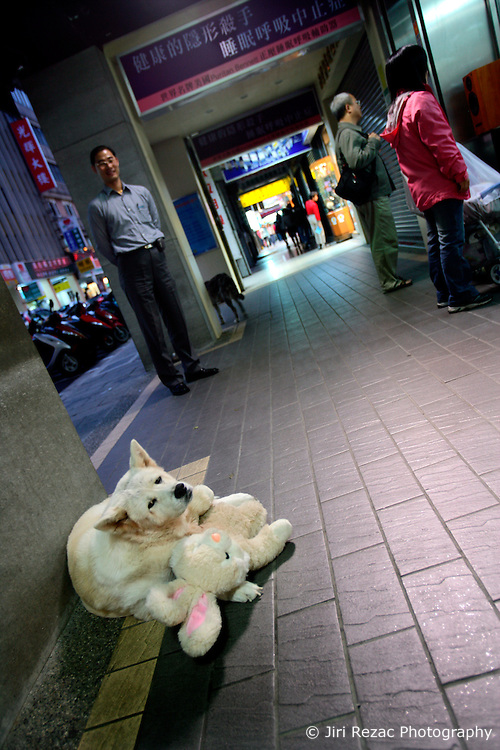 TAIWAN TAIPEI 4NOV07 - A dog cuddles a teddy bear on a pavement in downtown Taipei, Taiwan...jre/Photo by Jiri Rezac..© Jiri Rezac 2007..Contact: +44 (0) 7050 110 417.Mobile:  +44 (0) 7801 337 683.Office:  +44 (0) 20 8968 9635..Email:   jiri@jirirezac.com.Web:    www.jirirezac.com..© All images Jiri Rezac 2007 - All rights reserved.