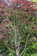 Beech Tree, 62 Dunemere Ln,  East Hampton, NY