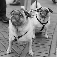 Hazel and Olive at My Dog Loves Central Park 2014