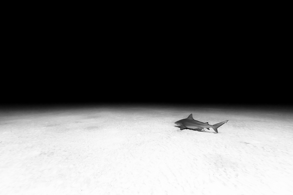 México, Quintana Roo, Playa del Carmen. A bull shark peacefully swimming near a sandy bottom some 60ft deep.