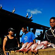 PENINSULA OF PARIA / PENINSULA DE PARIA<br /> Sucre State - Venezuela 2009<br /> (Copyright &copy; Aaron Sosa)