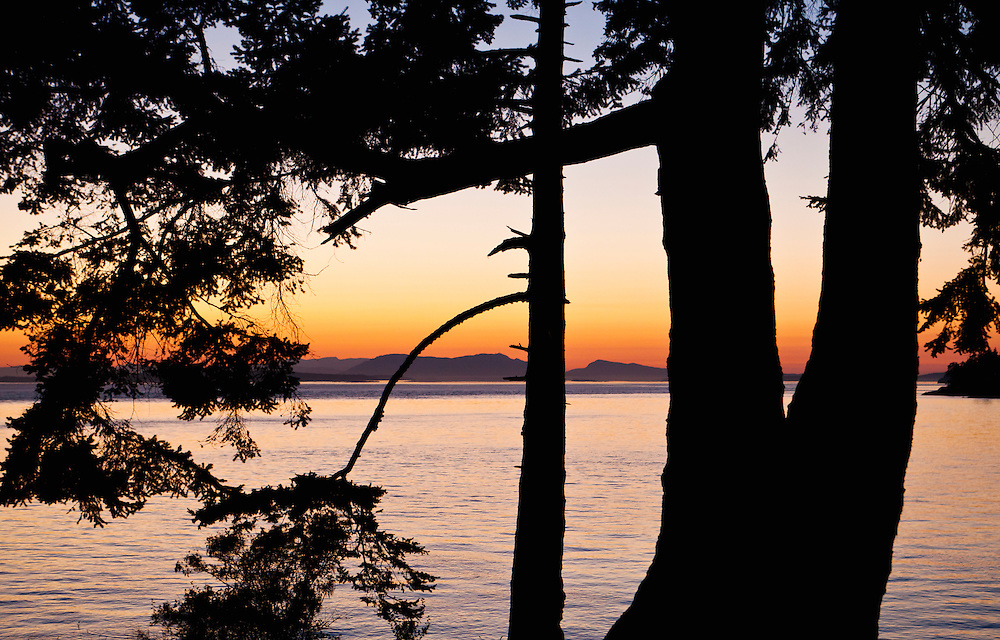 Silhouette of trees against a sunset over looking Haro Strait from San Juan Island, Washington, USA.