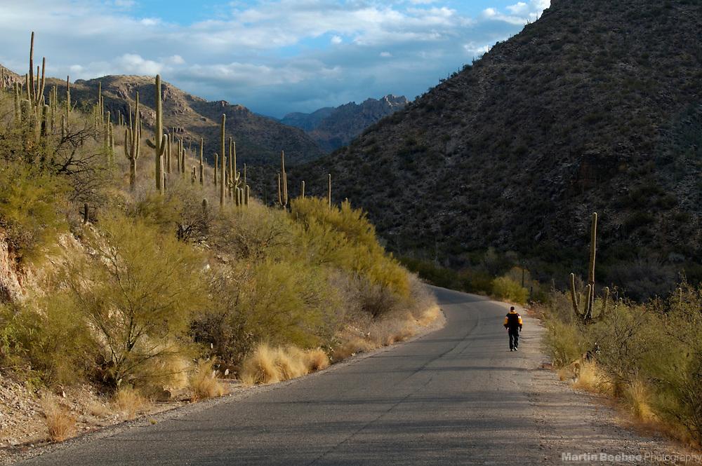 Lone hiker in Sabino Canyon, Sabino Canyon Recreation Area, Coronado National Forest, Tucson, Arizona