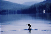 photo taken on highland lake, bridgton,maine.  Loon alone, calm water, magnificent reflection with lake profile in background.  created from canoe following closely no property release