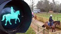 Horses pass a green light on a road crossing as they head out to the gallops at Newmarket, Suffolk, which has two racecourses, and is the home to a large number of stables and training yards.