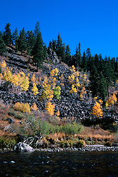 """Truckee River in Autumn 2""- These aspens were photographed along the Truckee River, just south of Truckee, CA.Photographed: October 2005"