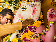 """09 SEPTEMBER 2013 - BANGKOK, THAILAND:  A Hindu priest in Bangkok, Thailand, anoints a statue of Ganesha during Ganesha Chaturthi services at Shiva Temple. Ganesha Chaturthi also known as Vinayaka Chaturthi, is the Hindu festival celebrated on the day of the re-birth of Lord Ganesha, the son of Shiva and Parvati. The festival, also known as Ganeshotsav (""""Festival of Ganesha"""") is observed in the Hindu calendar month of Bhaadrapada. The date usually falls between 19 August and 20 September. The festival lasts for 10 days, ending on Anant Chaturdashi. Ganesha is a widely worshipped Hindu deity and is revered by many Thai Buddhists. Ganesha is widely revered as the remover of obstacles, the patron of arts and sciences and the deva of intellect and wisdom.    PHOTO BY JACK KURTZ"""