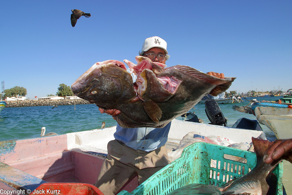 19 NOVEMBER 2002 - PUERTO PENASCO, SONORA, MEXICO: Fortunado Camacho, who's been fishing the waters off Puerto Penasco for 20 years, tosses fish from his boat after hauling in his day's catch at the public fish landing in Puerto Penasco, Tuesday, November 19.  PHOTO BY JACK KURTZ