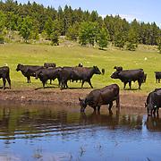 Lazy Days of Summmer, Double R Ranch, Loomis, Washington