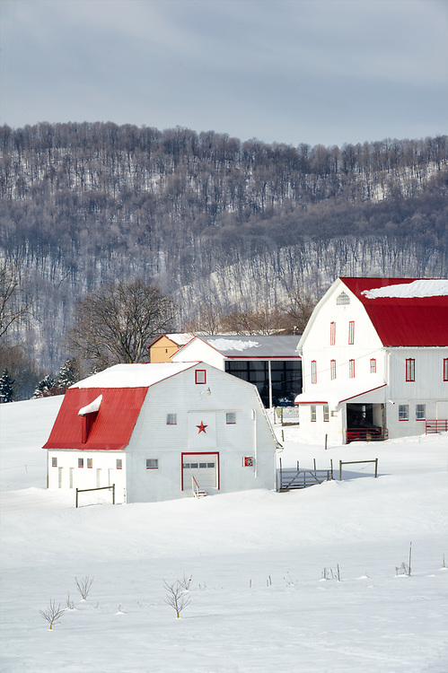 These red roofed barns in white sunny snow lie before a mountain of arced ridges covered in bare trees. Winter agriculture can be beautiful on a calm day after a storm, especially knowing the mud of March is about to arrive.