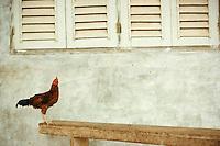 August 1973, Ibadan, Nigeria --- Rooster Standing on a Bench Below Shuttered Windows --- Image by © Owen Franken/CORBIS