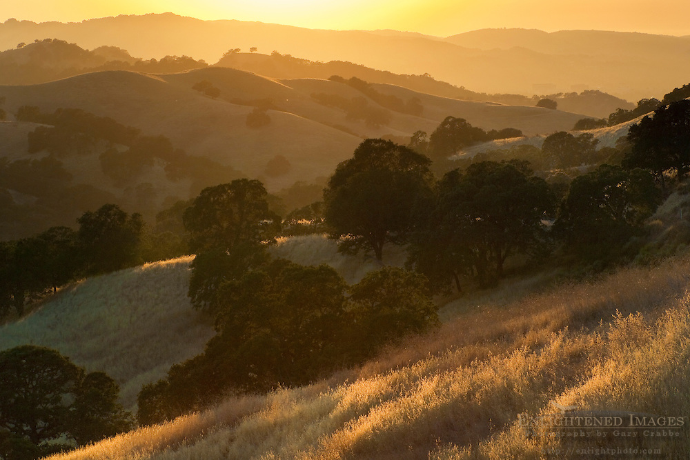 Oak trees and grass covered hills at sunset; Mount Diablo State Park; California
